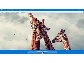 ТОП программ Windows 10 для просмотра фотографий
